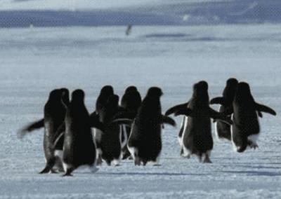機器企鵝去臥底,竟被企鵝圍著歡迎