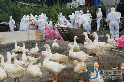 大陸H7N9禽流感又增 「珠江三角洲、粵東」活禽市場最多