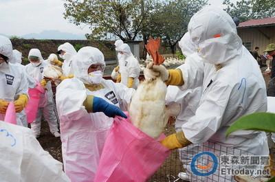 中國H7N9突變! 今年首例境外移入台商恐也為「新型」