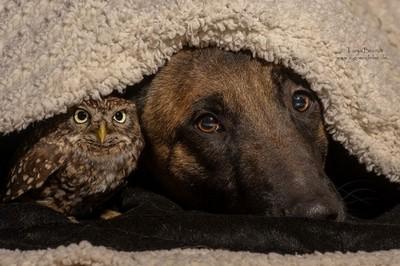 真實童話~小貓頭鷹與大狗的純愛友誼