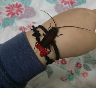 有蟑螂快來救我!別怕牠不過是張紙…