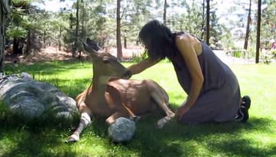 敏感小鹿也通人心 用舔舔表達感激❤