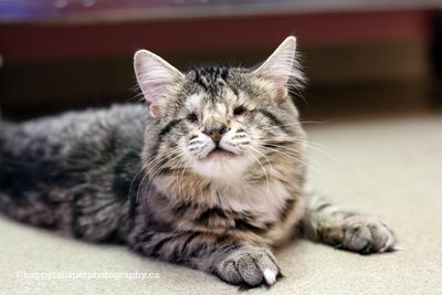 儘管兩眼全盲,流浪小貓仍努力活下去