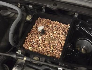 車只跑64Km,開引擎蓋發現…滿滿堅果