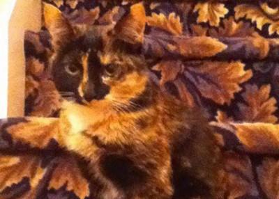 緊急視力測驗!你找得到貓咪在哪裡嗎