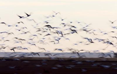 別用人類角度猜鳥!把牠們當外星人吧